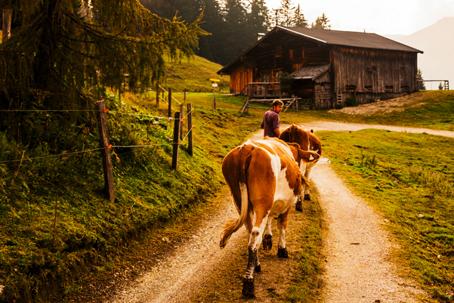 alpine pasture